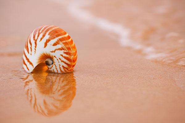 shell2